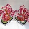 Cây san hô đỏ K165