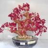 Cây san hô nhuộm đỏ CA116