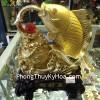 Cá chép vàng chiêu tài A187