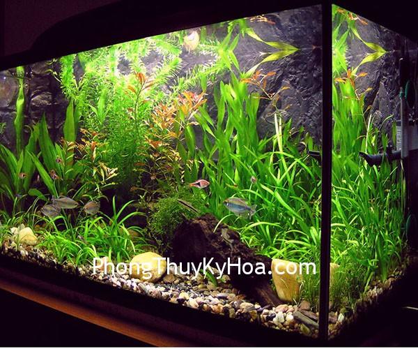 aquarium design 2 Nên đặt hồ cá ở chỗ nào?