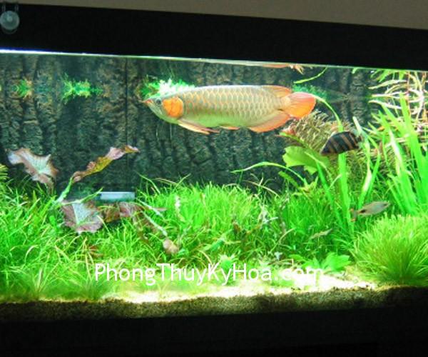 kimlong Vị trí đặt bể cá trong phong thủy