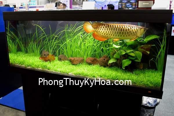 772011011phong thuy be ca phong thuy choi ca canh 2 Hồ cá trong phòng ngủ