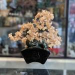 KC105 cay thach anh vang dang bonsai 2 150x150 Cây thạch anh vàng thân bonsai chậu kiểu nhật mới (Phước) KC105