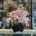 KC120 cay thach anh hong dang bonsai 150x150 Cây thạch anh hồng thân bonsai chậu kiểu nhật mới (Phước) KC120