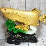 ln165 than ca kim long tren be cai 21 150x150 Thần cá kim long vàng bóng trên bẹ cải như ý xanh sóng tiền vàng khủng LN165